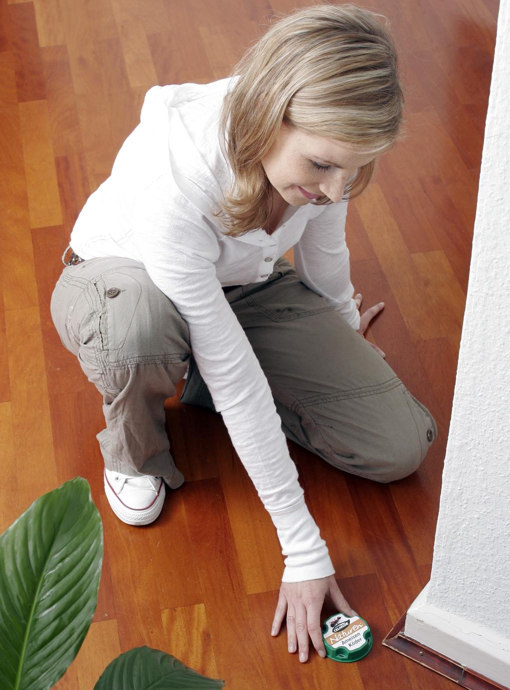 Ameisenköder wird im Haus ausgelegt