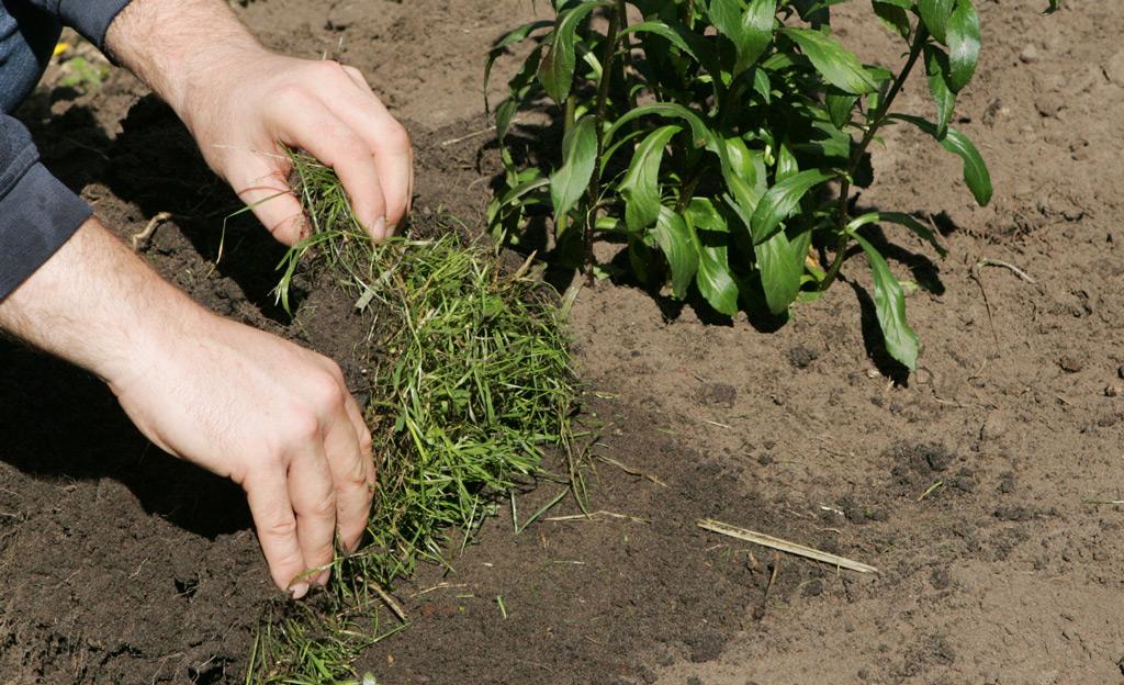 Grassoden als Mulchmaterial