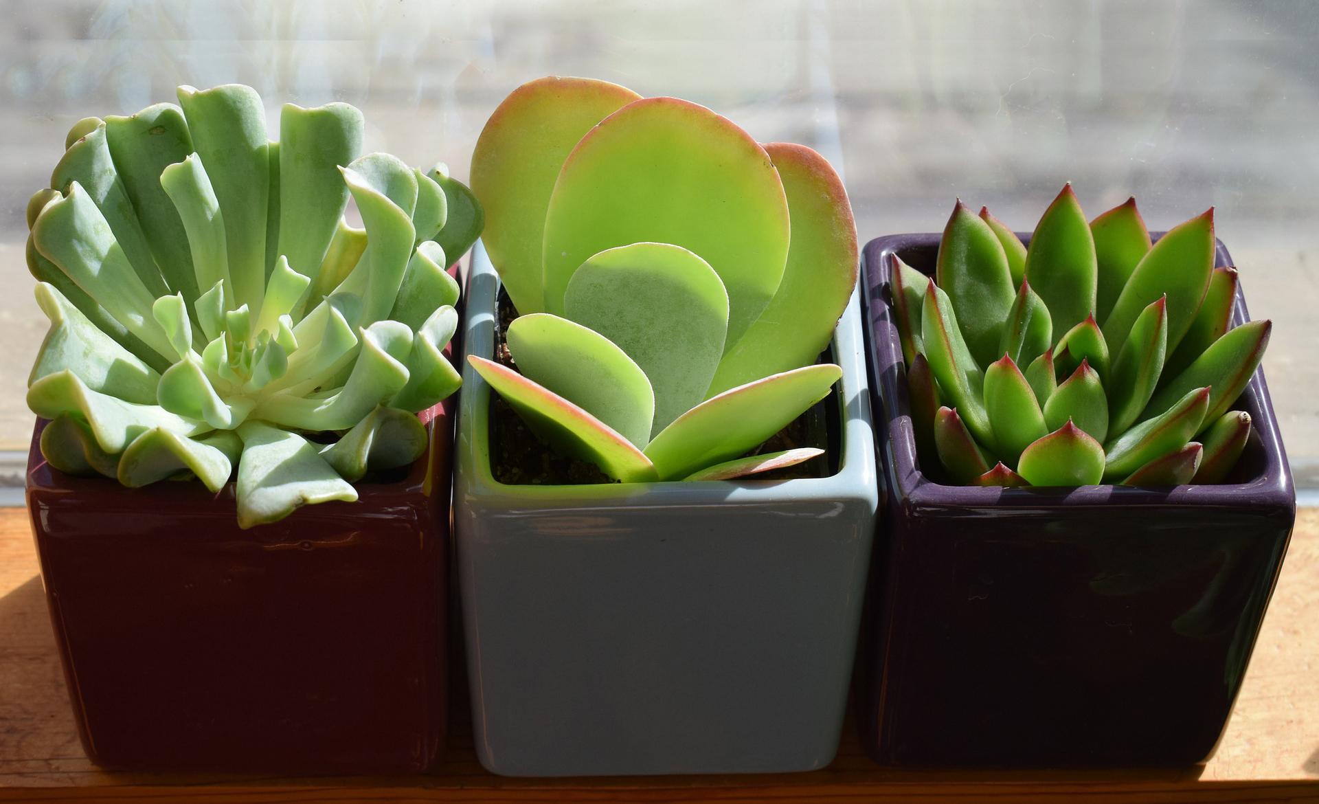 Zimmerpflanzen kaufen