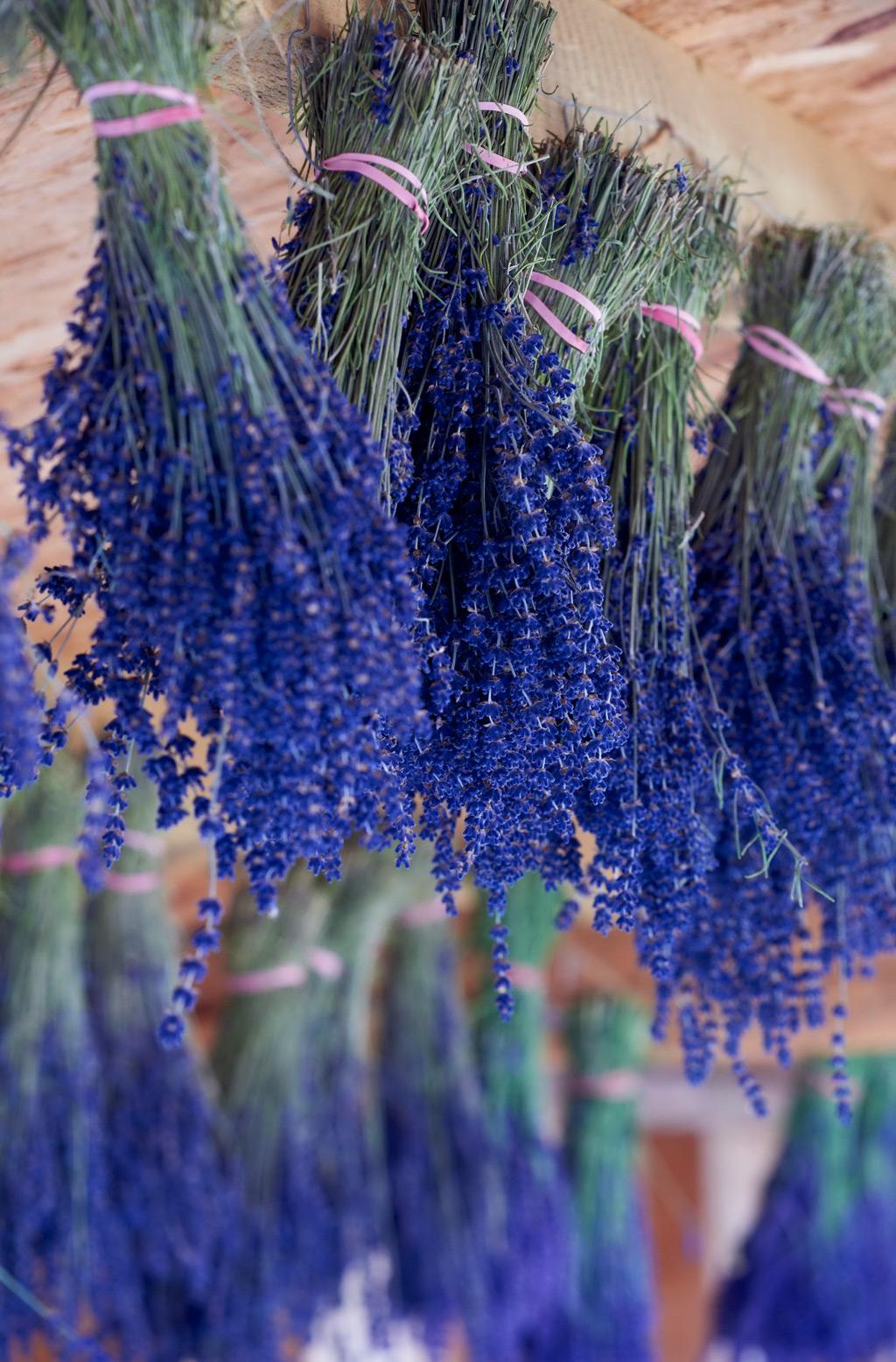 Beliebt Bevorzugt Lavendel trocknen | selbst.de @HN_86