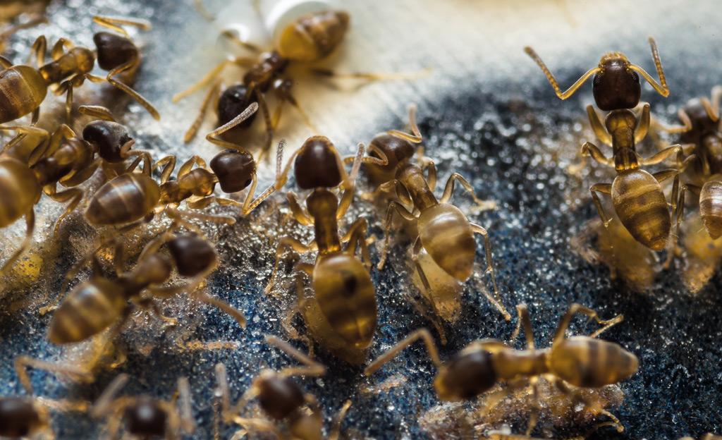 Gut bekannt Fliegende Ameisen | selbst.de QZ74