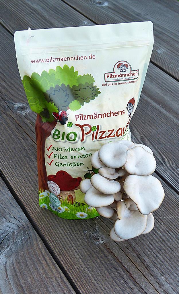 Pilze züchten