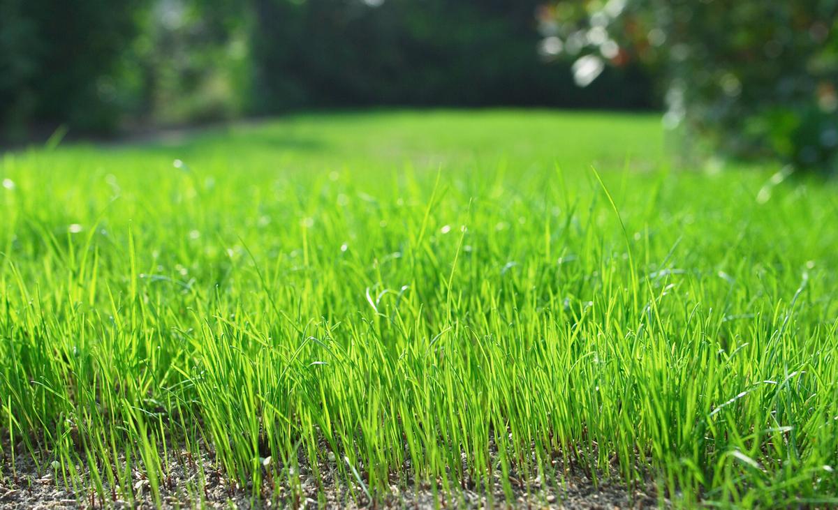 Rasen Erneuern Kosten