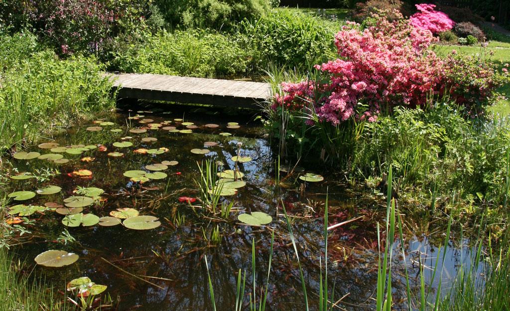 biotop naturteich selbstde
