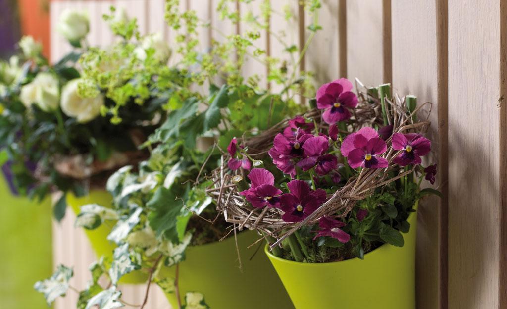 Balkonpflanzen Selbst De