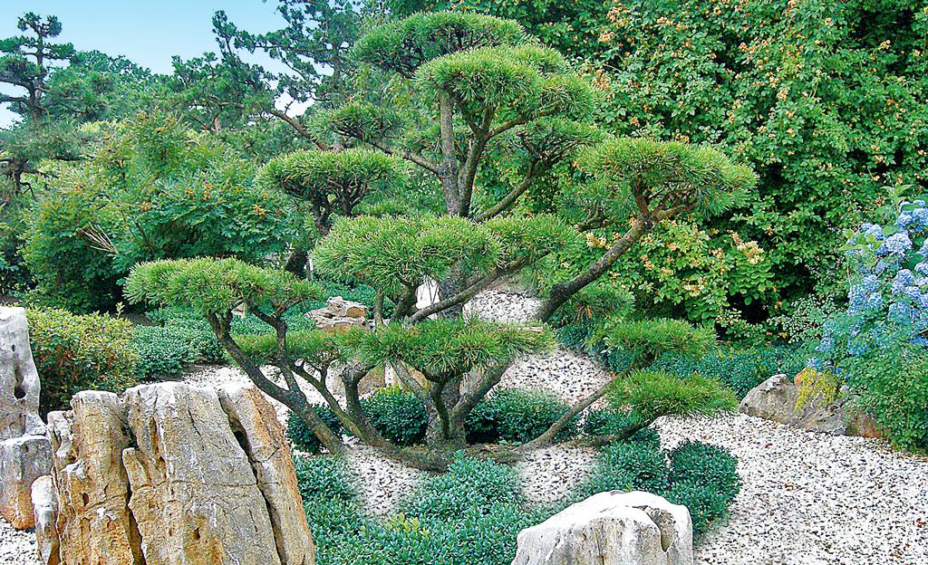 Kiesgarten - Asiatische zimmerpflanzen ...