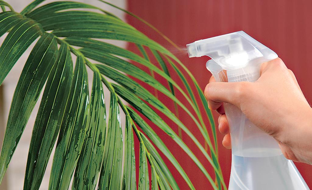 Pflanzenpflege Zimmerpflanzen | selbst.de