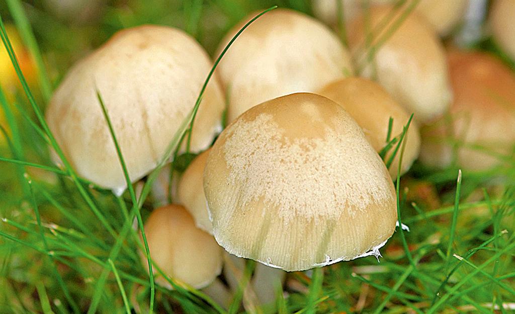 Ganz und zu Extrem Pilze im Rasen | selbst.de &PL_85