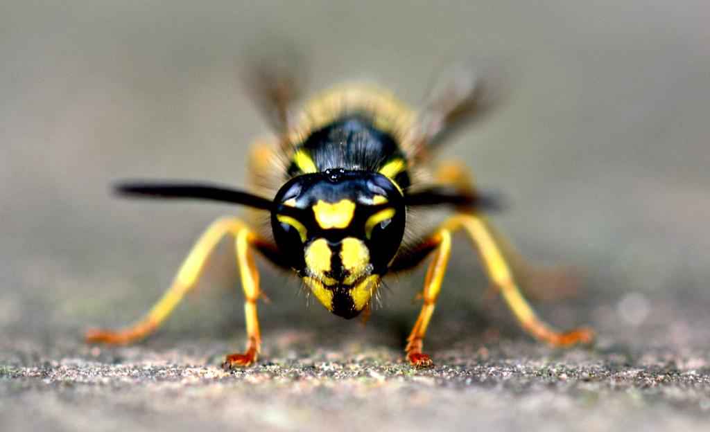 wespennest selber entfernen