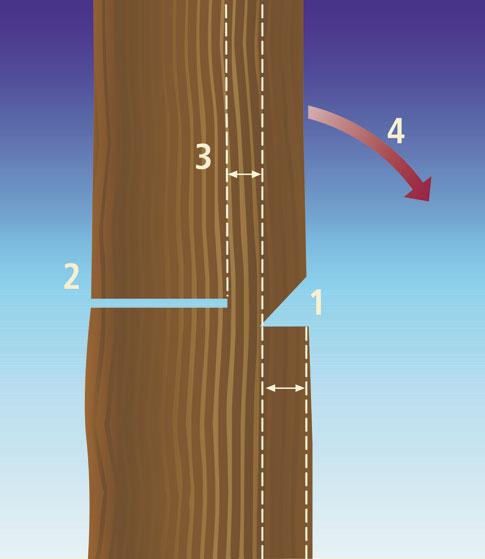 Bild 2 von 4