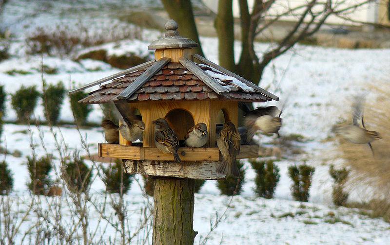 Vogelhausbau - leicht gemacht