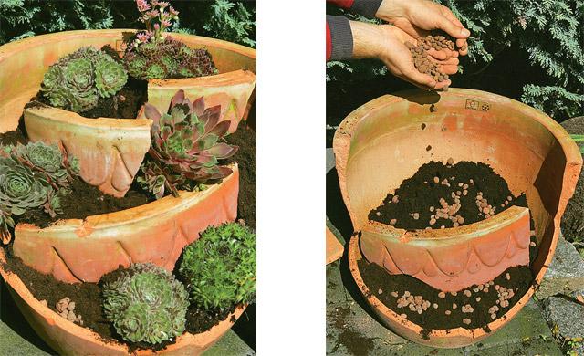 Hauswurz sempervivum steingarten for Steingarten deko