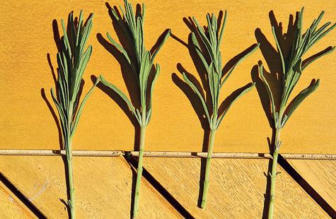 Hervorragend Lavendel vermehren | selbst.de CL56