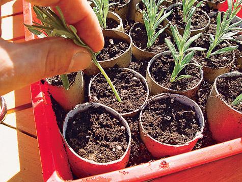 Häufig Lavendel vermehren | selbst.de FS61