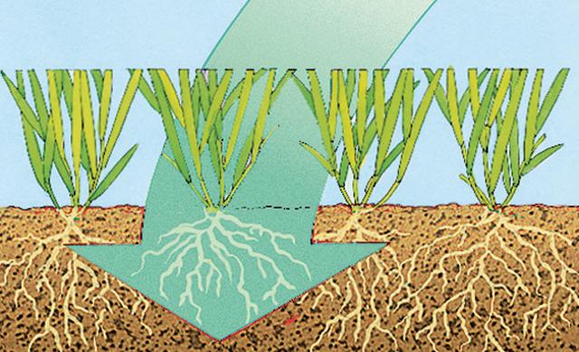 Soll-Zustand – gut belüftete Grasnarbe