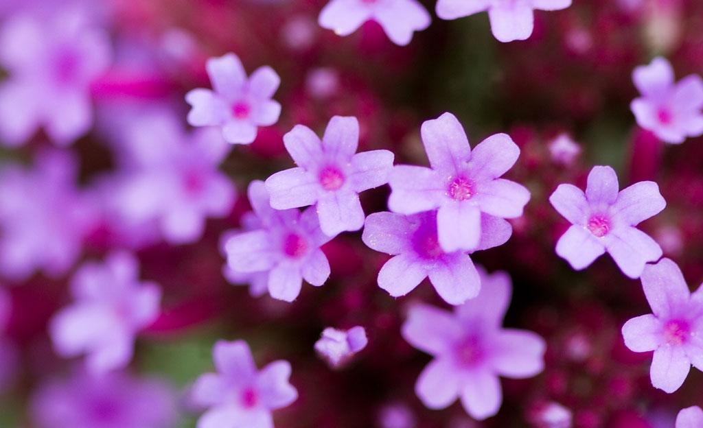 Pflegeleichte Sommerblumen Garten : Sommerblumen  Beete anlegen  selbstde