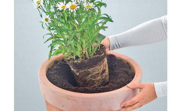 Pflanze einsetzen