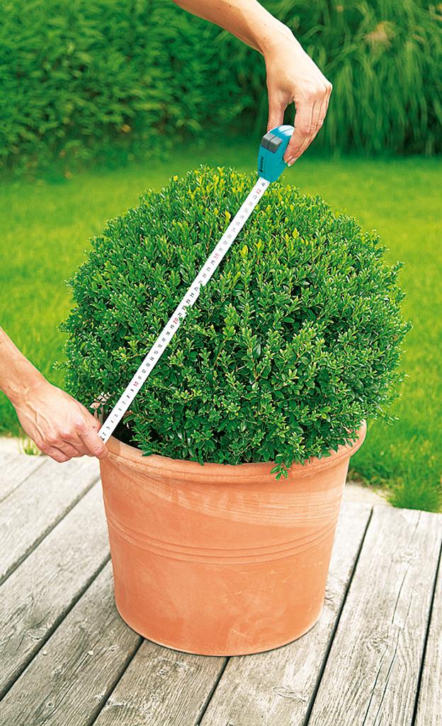 Ganz und zu Extrem Buchsbaum schneiden | selbst.de @IF_01