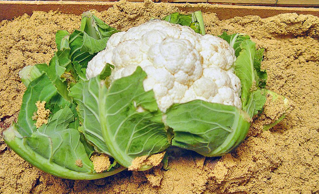 Gemüse mäusesicher lagern