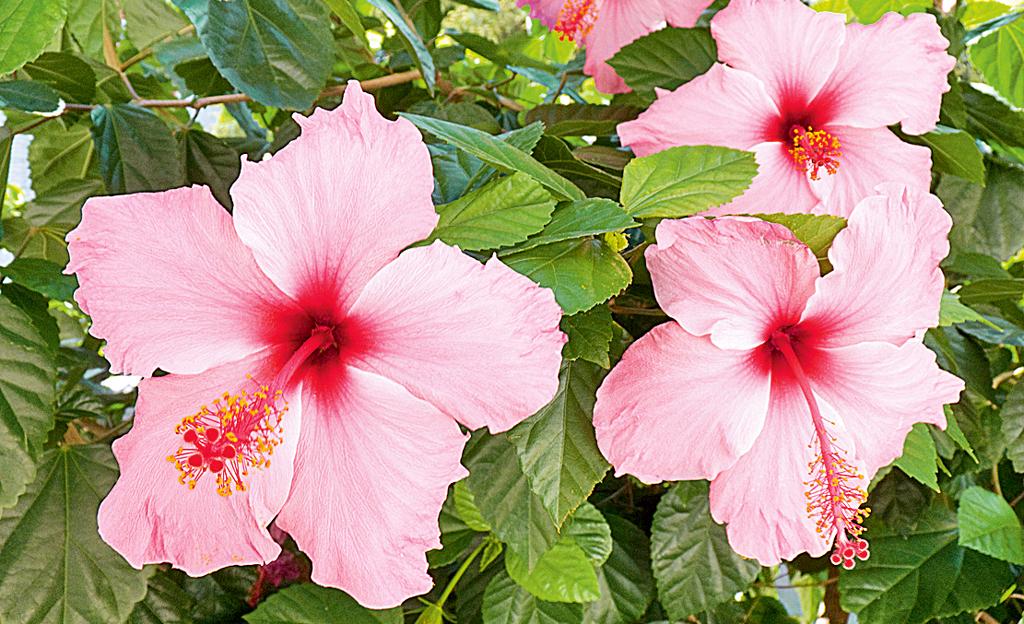 Blumen aus dem Urlaub