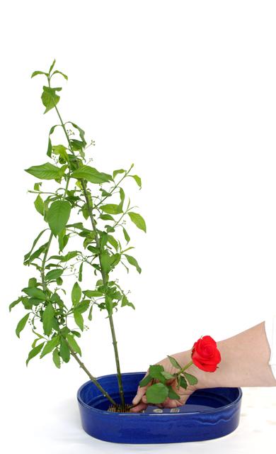 Ikebana: Blumengestecke selber machen