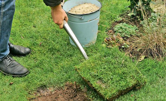design#5001454: hinweise krokus pflanzen rasen blumentopf, Garten und erstellen