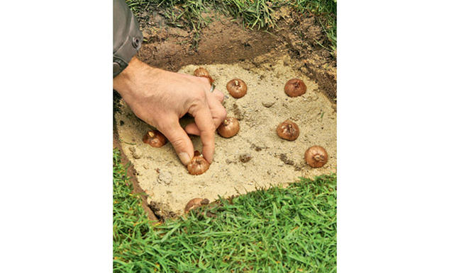 download hinweise krokus pflanzen rasen blumentopf | siteminsk, Garten und erstellen