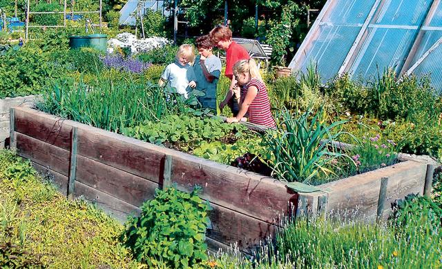 Pflegeleichter Garten | selbst.de