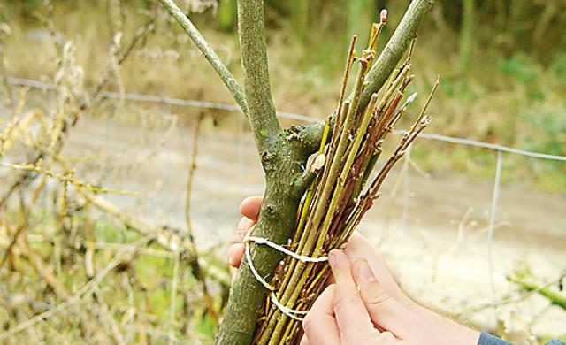 Nestunterlage aus Reisig