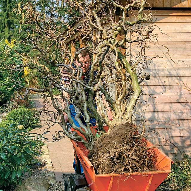 Sträucher umpflanzen