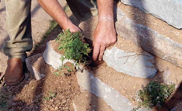Trockensteinmauer bepflanzen