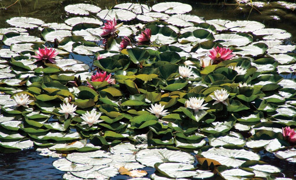 Teich Bepflanzen Selbst De