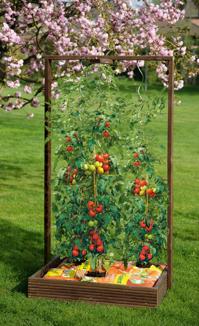 tomaten pflanzen balkon anleitung das beste aus. Black Bedroom Furniture Sets. Home Design Ideas