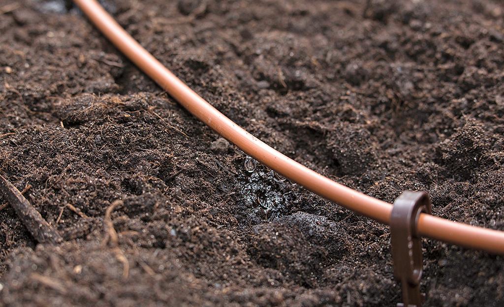 Das Rohr des Gärtners in Mami verlegt