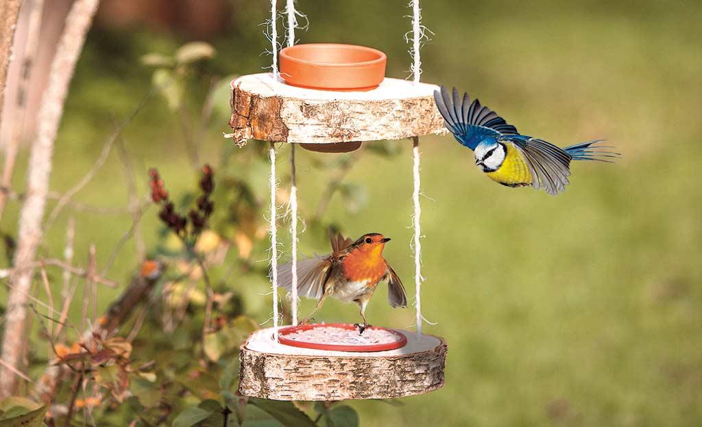 Vogelfutter Selber Machen