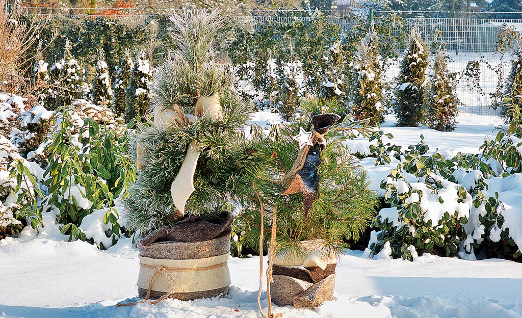 Winterharte Kubelpflanzen Selbst De