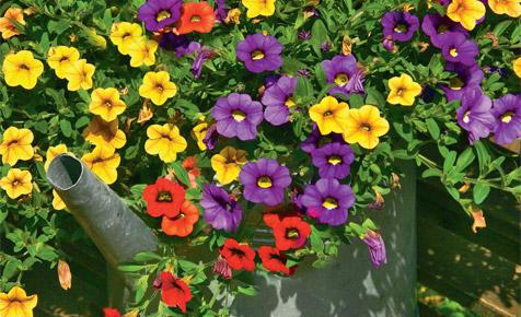 Gartendeko: Blumentopf aus Gießkanne