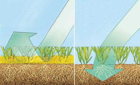 Rasen vertikutieren & lüften