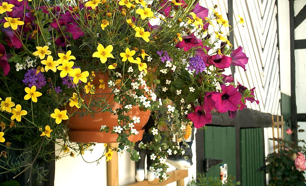 Blumenampel