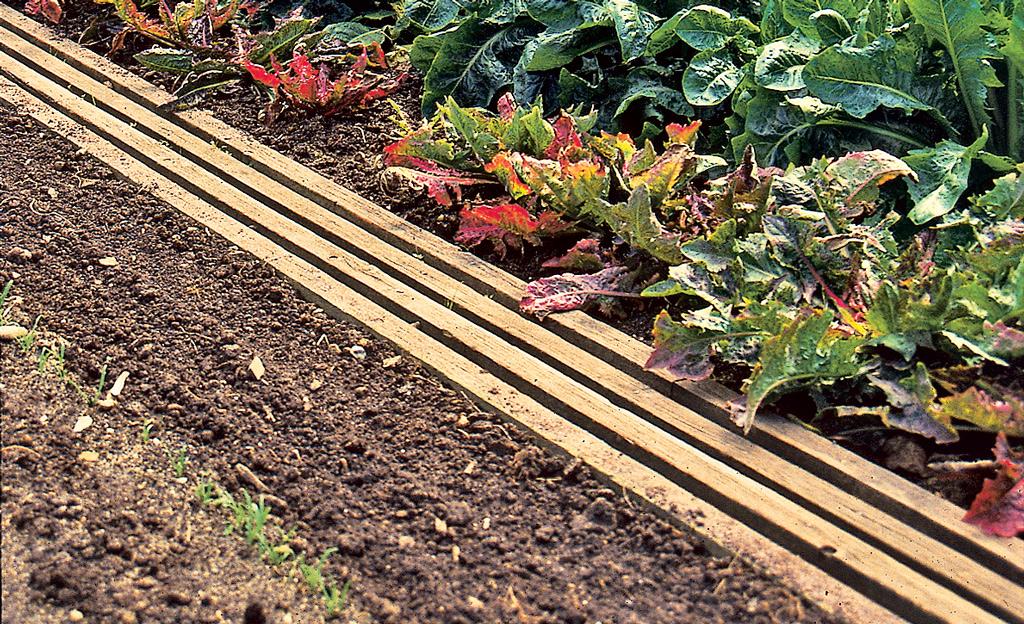 Gemüsebeet: Günstigen Gartensteg bauen