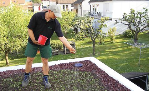 Gründach bepflanzen