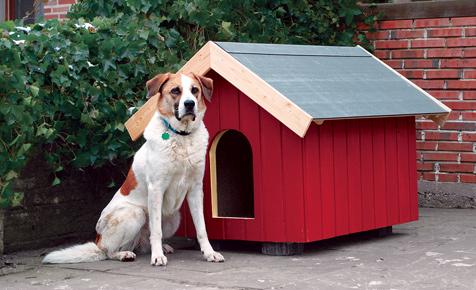 Bauanleitung: Hundehütte selber bauen
