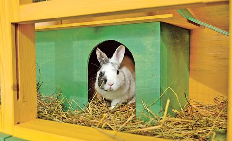 Kaninchenkäfig bauen