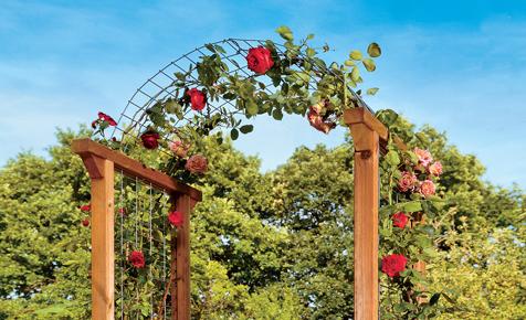 Rosenbogen aus Gabionen