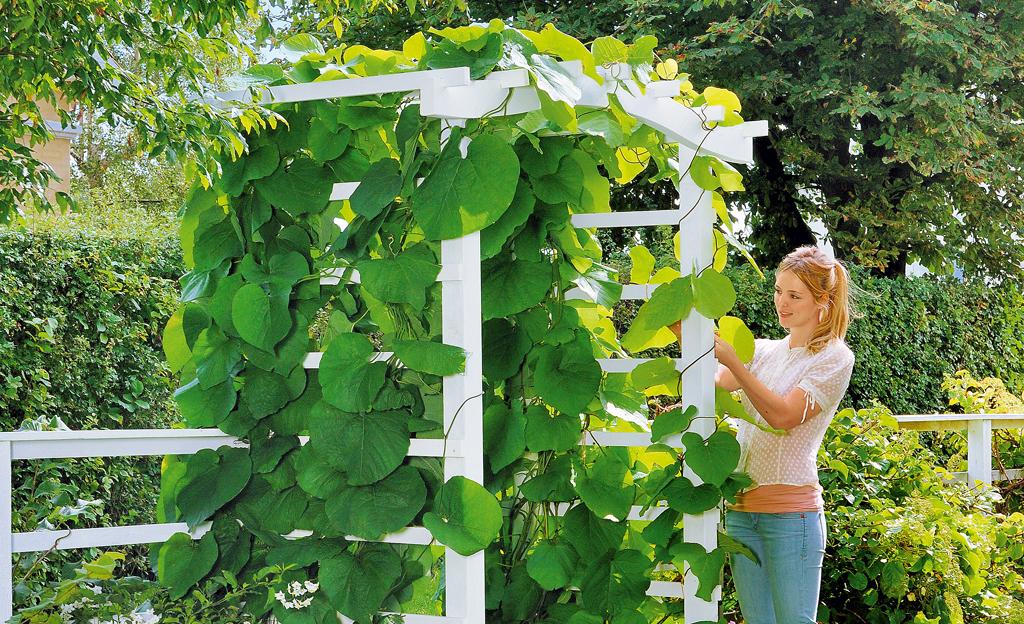 Spalier-Gartentor
