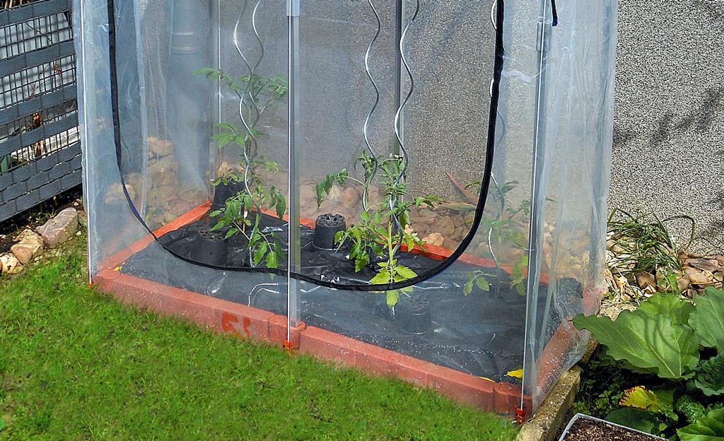 Mini-Gewächshaus für Tomaten
