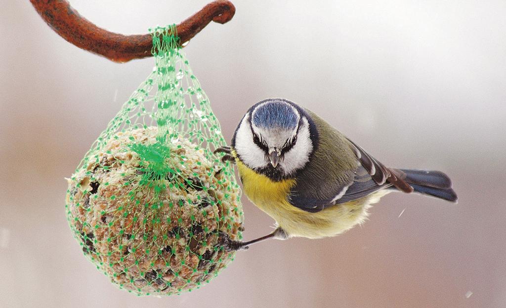 Winterfütterung für Vögel