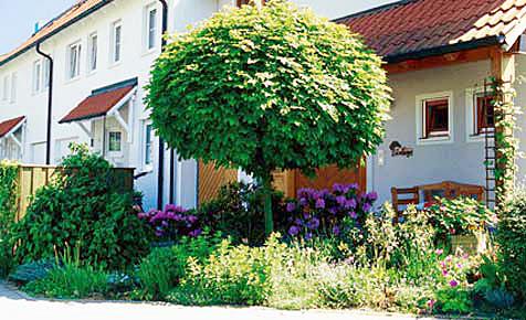 Sträucher und Bäume umpflanzen