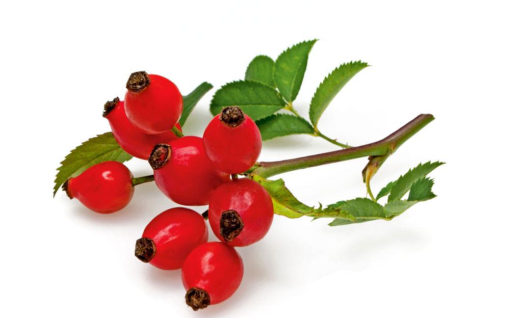Rosenfrüchte