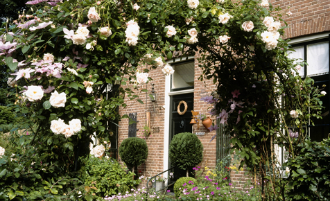 Rosen vermehren mit Stecklingen